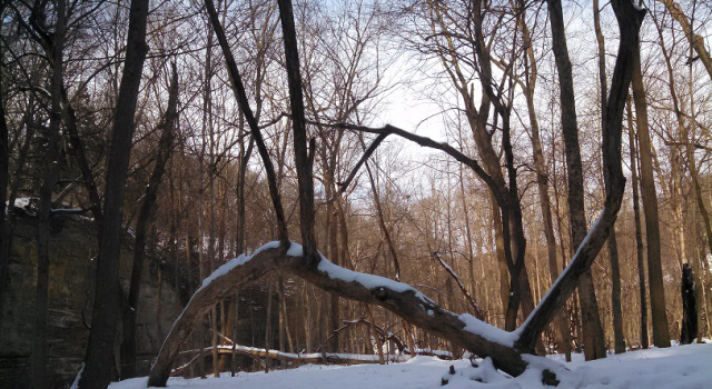 dormanttrees